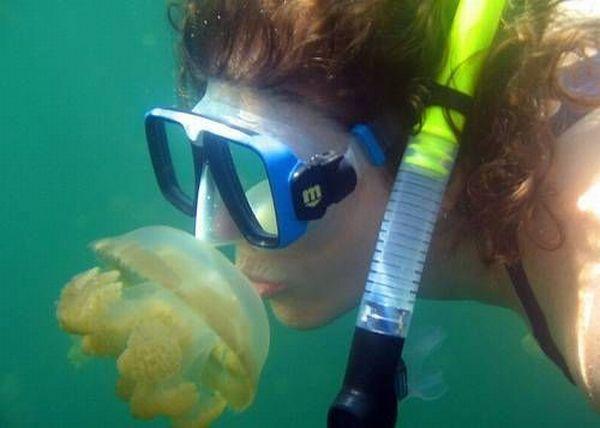 palau 01 Swim among thousands of Jellyfish