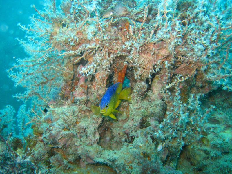 aquarium%20contest6 Mote Aquarium Reef Photo Contest