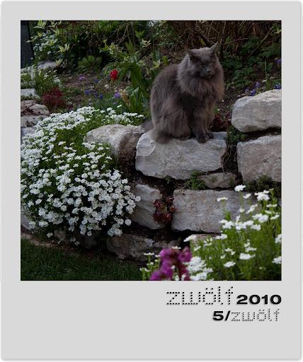 5-zwoelf2010-polaroid.jpg