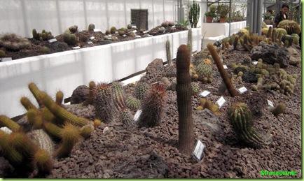 panoramica orto botanico roma