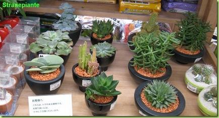 cactus tokyu hands
