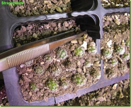 segue-stratificazione-semenzali