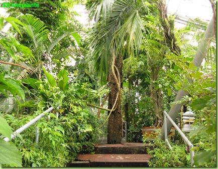 Serra tropicale