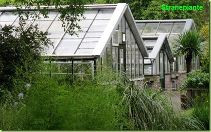 serra farfalle e succulente cactacee