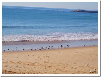 Algarve 044