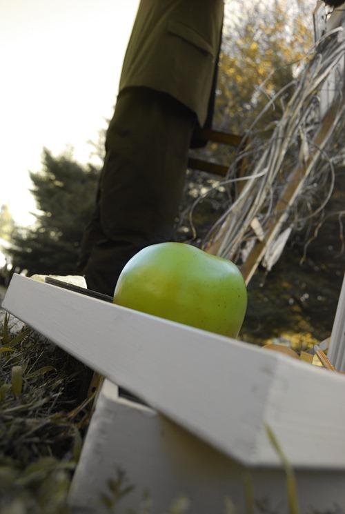 apple hue