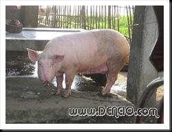 Di napicturan yung fish eh.. yung pig na lang... hehehe