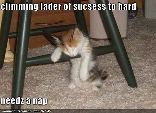 funny-pictures-kitten-climbs-the-ladder-of-success1