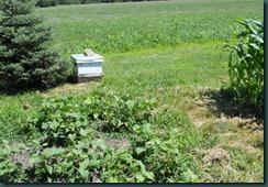 Hive In Garden