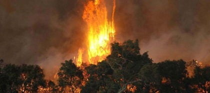 bushfires412