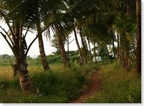 Goa village