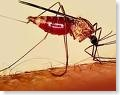 malaria cases in Goa