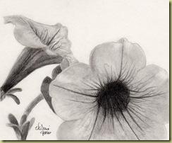 Petunia Graphite