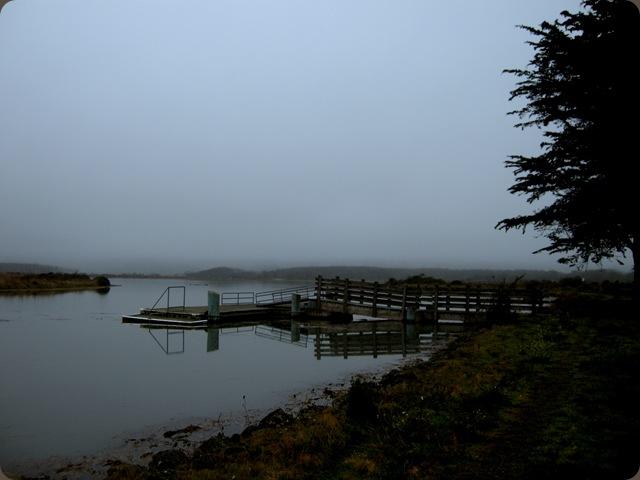 Eureka fog (6)