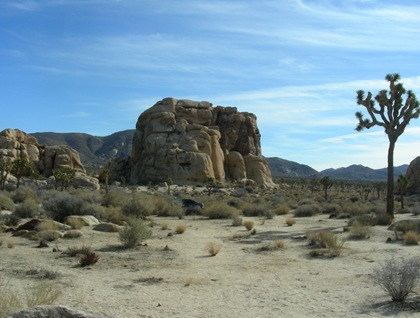 Joshua Tree 1-2-2008 1-37-15 PM