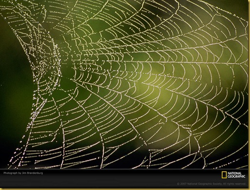 spiderweb-dew-469895-lw
