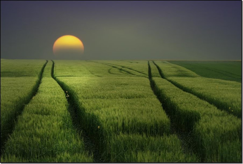 field by moonlight Veronika Pinke