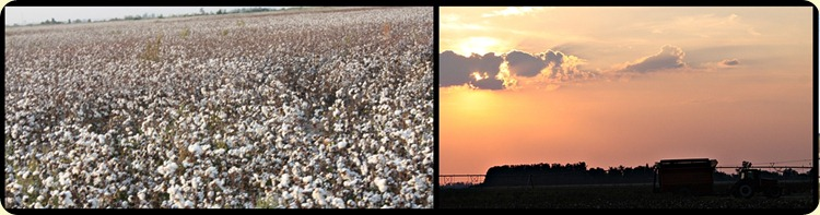 cotton grwng to macine