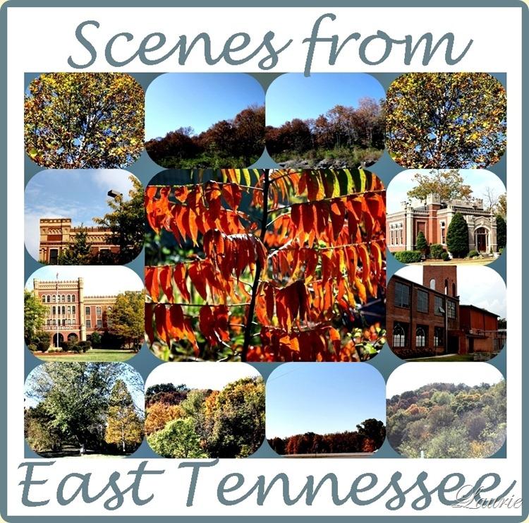 scenes from e tn