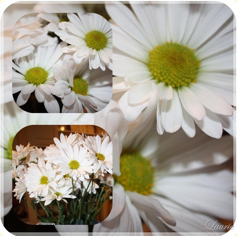 daisy mos