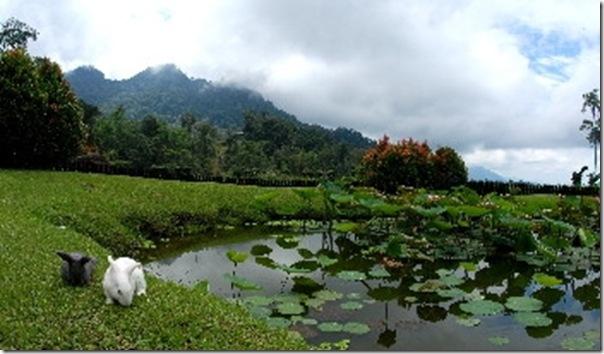 Borneo Highland 2