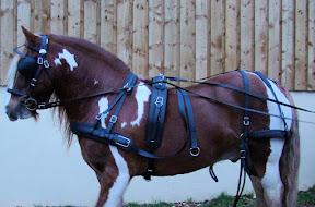 Arden Dexter Wipe Clean BioThane Single Horse Harness