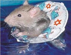 rats_sinking_ship