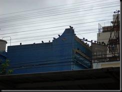 palomas urquiza