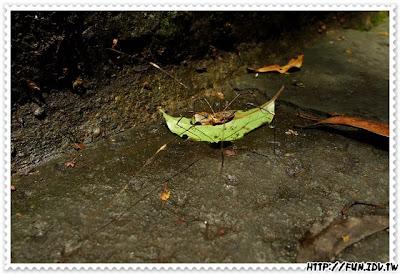 20100626_陽明山動物星球之旅