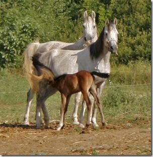 Equesterie Tranquille-TarzanogForeldre20070715s