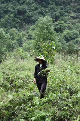 Une fermière dans les champs