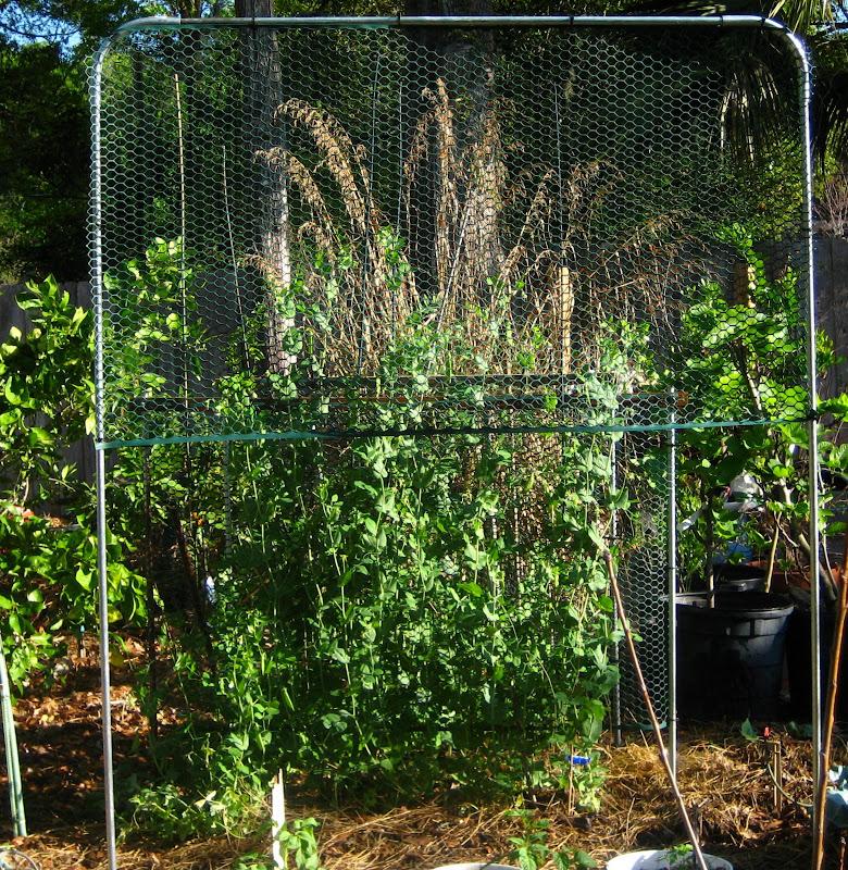 My five minute 10 tomato trellis - The garden web forum ...