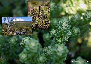 20100208 Tasmania - Hartz Mountain