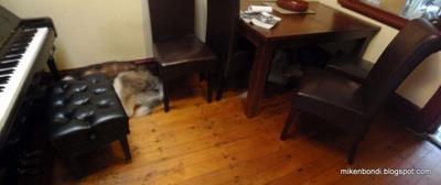 P2090001-2 dogs under tables [ice]