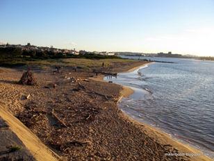 off-leash dog beach