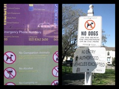 Waverley Council - conflicting dog signs at Bondi Beach