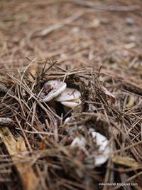 Arboretum de Cardeilhac - mushrooms
