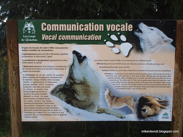 Wolf vocal communication primer