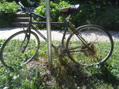 image of jungle bicycle