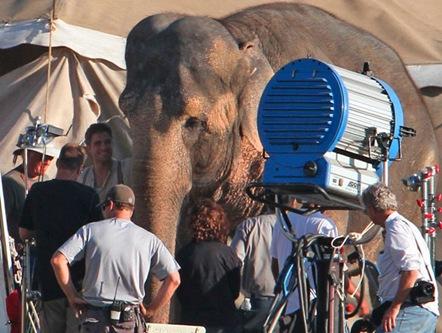Robert Pattisnon bañando a un Elefante