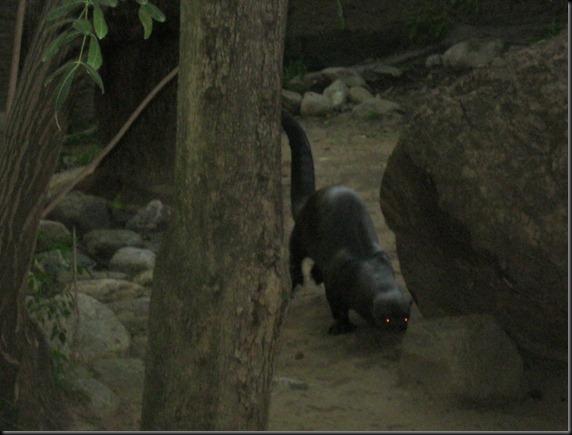 zoo! 036