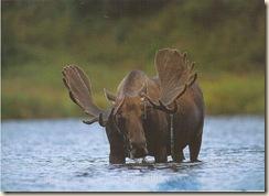 Moose-tastic!