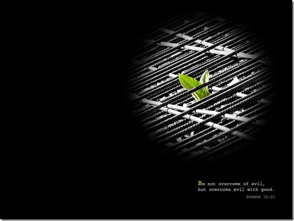 leaf_788_1024x768