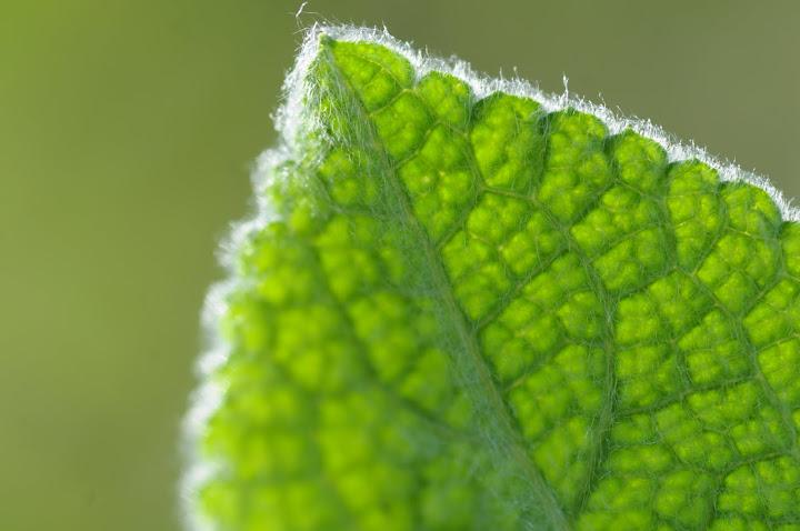 Bilder in Grün
