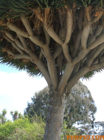 a_tree_that_640_11.jpg