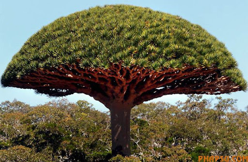 a_tree_that_640_14.jpg