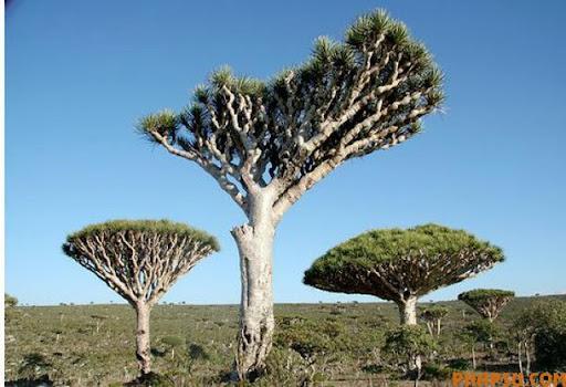 a_tree_that_640_17.jpg