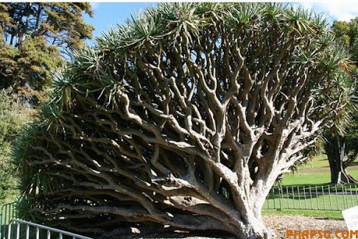 a_tree_that_640_18.jpg