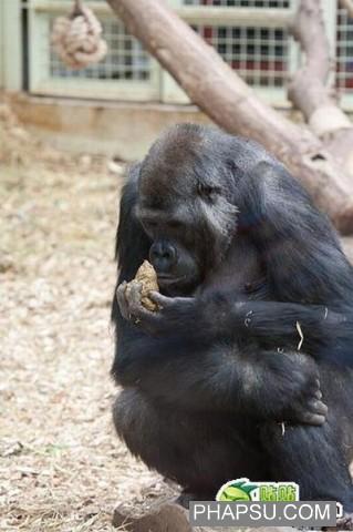 gorilla_wtf_05.jpg