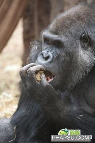 gorilla_wtf_10.jpg